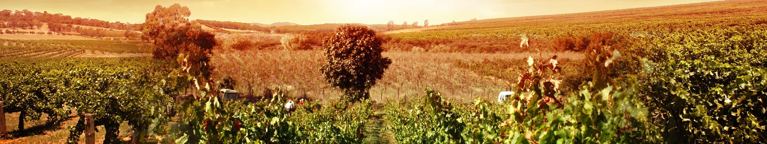 paysage-montblanc-domaine-des-amiels-vigneron-en-languedoc